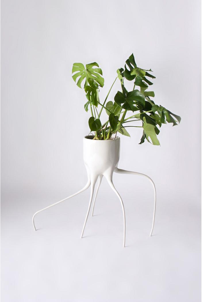 Monstera Plant Pots By Tim Van De Weerd  Monstera Plant Pots * By Tim Van De Weerd Monstera Plant Pots By Tim Van De Weerd 1