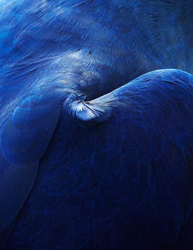 Strong Birds Details * Thomas Lohr thomas lohr Strong Birds Details * Thomas Lohr 5 2