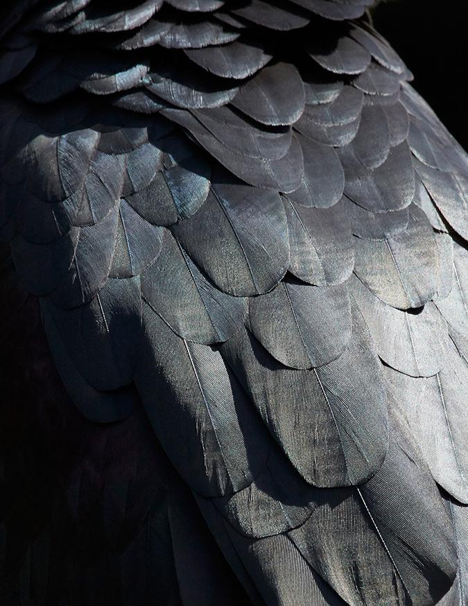 thomas lohr Strong Birds Details * Thomas Lohr 9 2