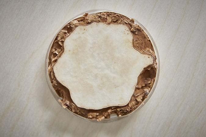 Mushroom mycelium - the unique material to suede-like furniture suede-like furniture Mushroom mycelium - the unique material to suede-like furniture dg sebastian cox ninela ivanova 3