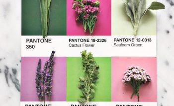 Lucy Litman's Pantone 'Pairing' Food Cards